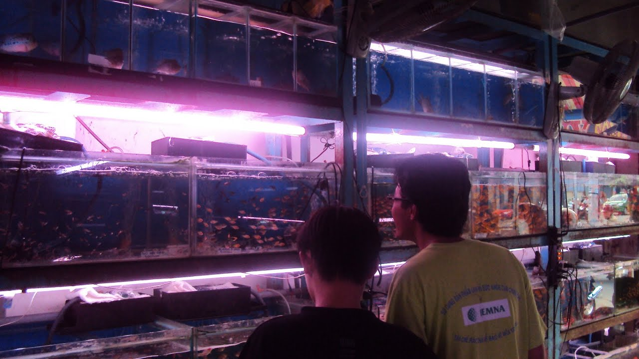 Crazy fish store in asia aquarium shop in vietnam youtube for Tropical fish shop