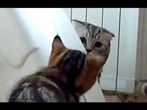 Funny kittens playing spy thriller. Mission Impossible ...