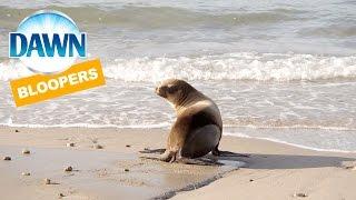 Dawn Helps Save Wildlife - Sea Lion Beach Blooper
