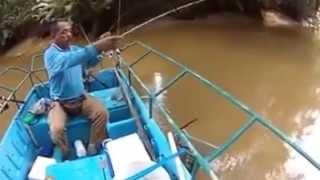 泰國蝦 也太大隻了吧