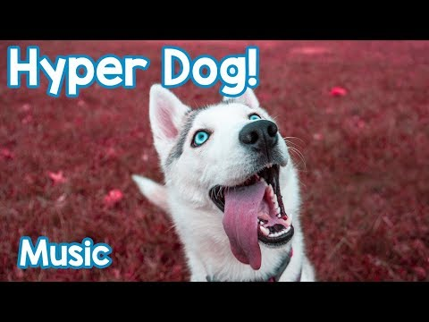 Music for Hyperactive Dogs! Calm Your Dog Down and Stop them Being Hyper with this Soothing Music!