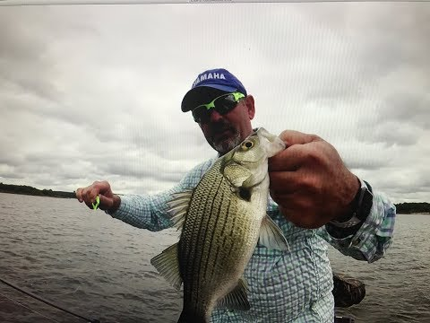 Catching Summer Surface Exploding White Bass