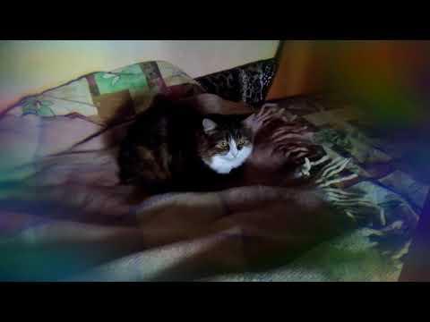 Как отучить кота гадить на диван совет специалиста