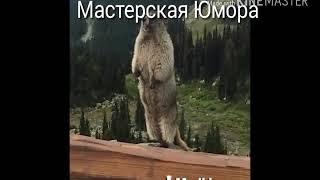 Мастерская Юмора!!