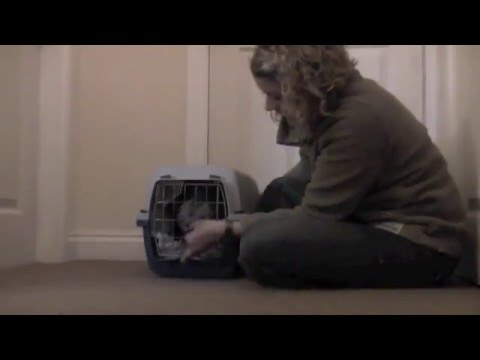 Cat carrier training part 3