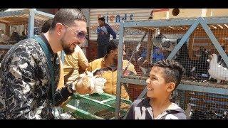 جولة سوق الحمام ج٢ #جمهورية_المحله_الكبري_للحمام  Egyptian pigeon's market