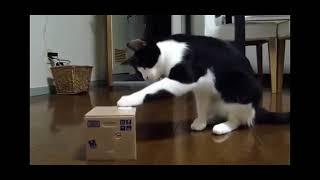 Забавные, короткие ролики про кошек.