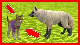 СИМУЛЯТОР ВОЛКА #3 РОДИЛСЯ ВОЛЧОНОК Жизни Зверей WildCraft про котят и собак от ДЕТСКИЕ ИГРЫ