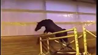Rubignon Jumping - Eurequine LLC Stallions