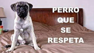 PERRO QUE SE RESPETA | Hola Soy Ale...
