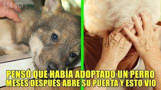 Anciana creía que había adoptado a un perro, meses después ella ve el terror con sus propios ojos