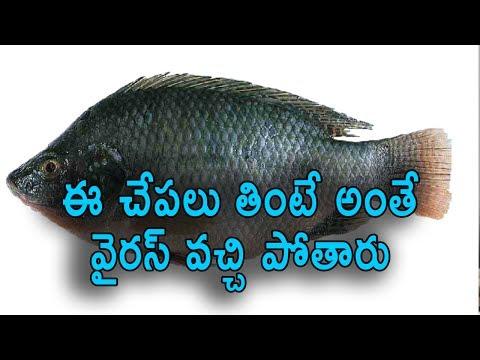 చేపలుతింటే వచ్చే వైరస్   Warning - Stop Eating Tilapia Fish    Health News   Virus