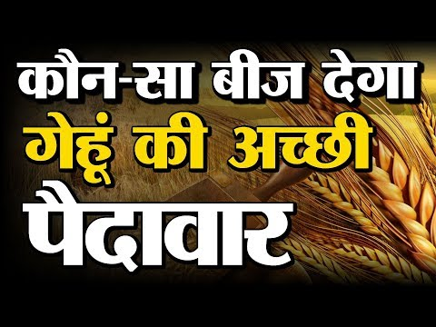 Wheat Seeds and Varieties  In Baatein Kheti Ki - On Green TV