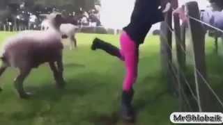 צוחקים עם חיות בר