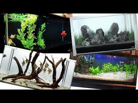 recopilacion de acuarios excelentes dise os youtube