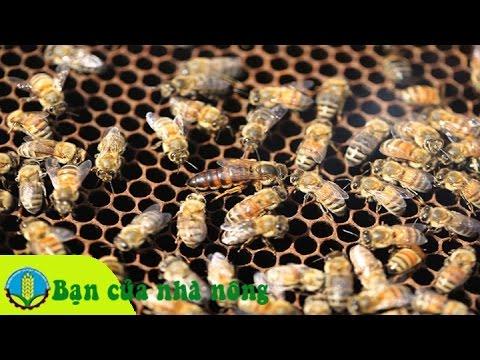 Mô hình, kỹ thuật nuôi ong lấy mật theo mùa vụ