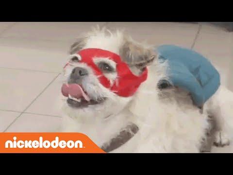 Pets Love Nickelodeon | Nick