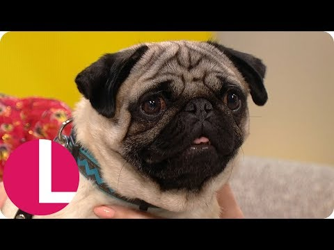 Beattie Edmondson Thinks Harley the Pug Is the Most Professional Actor She's Worked With! | Lorraine