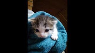 Как Вывести блох у кормящей кошки и котёнка?!!!!!СМОТРЕТЬ ВСЕМ!!!!!!