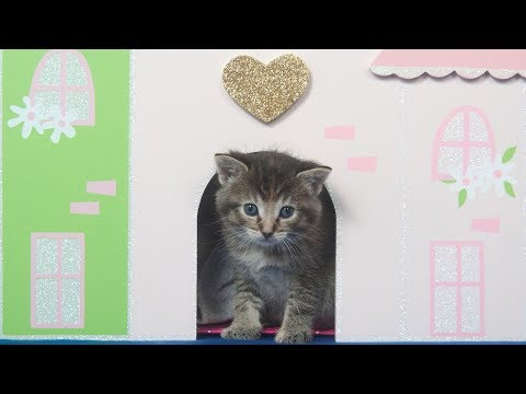 Funny Cats Play In Doll House - Funny Kittens Love Doll Houses Compilation (2018)