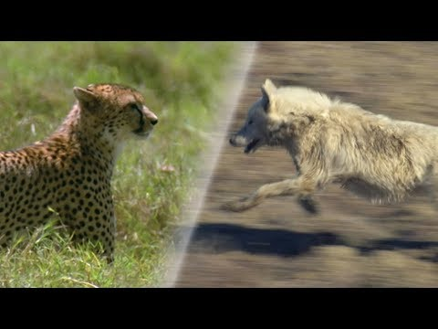 Greatest Fights in the Animal World  Earth Unplugged