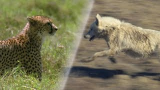Download Greatest Fights in the Animal World   Earth Unplugged Mp3 and Videos