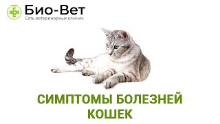 Симптомы болезней кошек. Ветеринарная клиника Био-Вет.