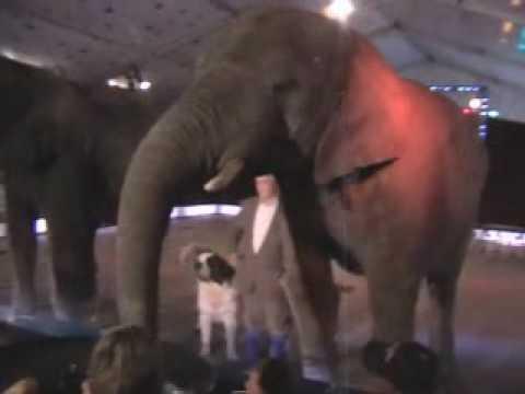 Elefantenshow Wendell Huber