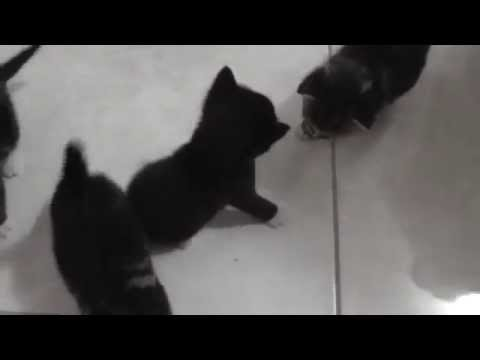 6 Cute Baby Rescue Kittens 10th January 2015 - DCH Animal Adoptions