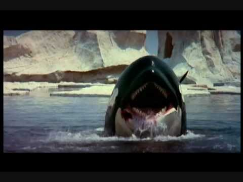 Orca the killer whale movie - photo#19