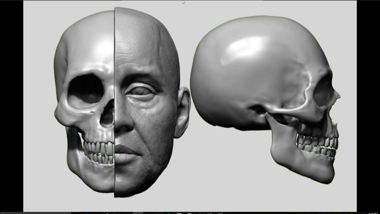 Zbrush Facial Anatomy Tutorial Youtube