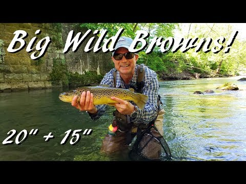 WBD - Fly Fishing Pennsylvania Big Wild Browns