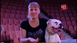 Дрессировщики в цирке(Как укротить непослушного пса: дрессировщики показали мастер-класс в цирке Кроме того, артисты показали,..., 2016-08-04T16:29:57.000Z)
