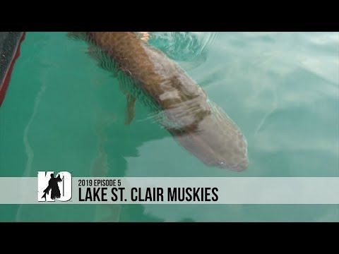 Lake St. Clair Muskies - Episode 5