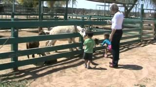 Camel farm in Yuma, AZ