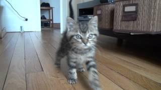 Mon Petit chaton a trop faim et me suit partout - trop mignon ! Rassurez vous il a bien mangé :)