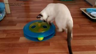 Как тайский котик Монте Кристо долго гонял шарики в треке! Тайские кошки   это чудо! Funny Cats