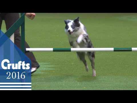 Agility - Crufts Single Heats - S/M/L - Agility | Crufts 2016