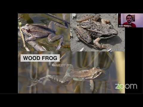 Amphibians And Reptiles Of The Rouge Watershed