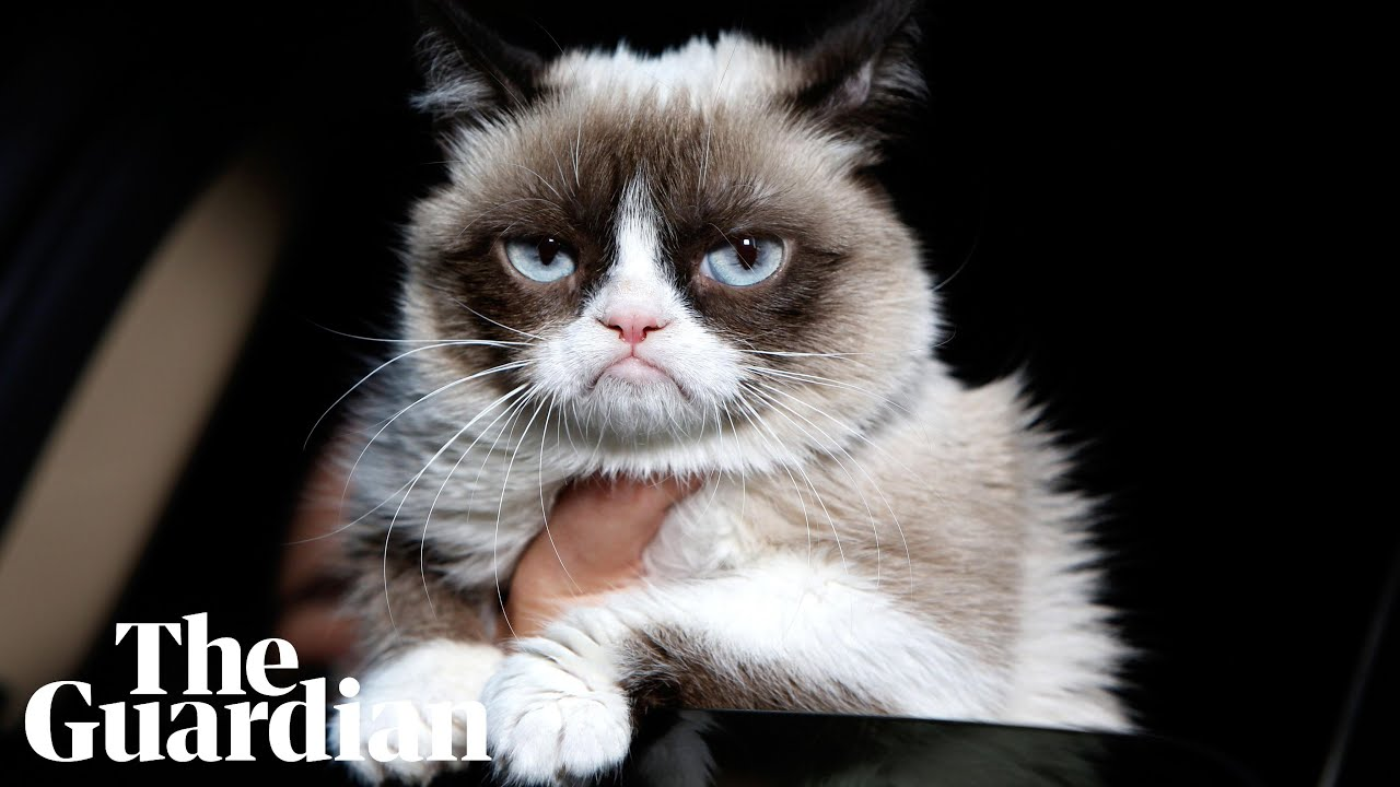 Grumpy Cat dies aged seven: 'Some days are grumpier than
