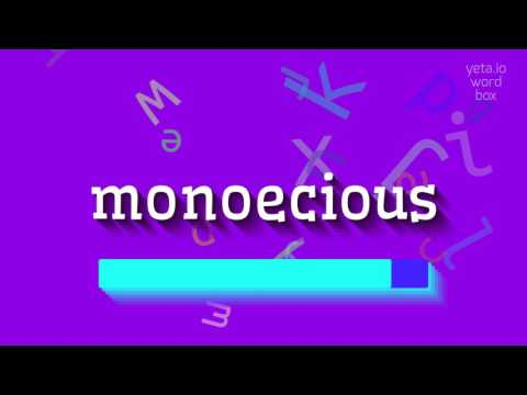 "How to say ""monoecious""! (High Quality Voices)"