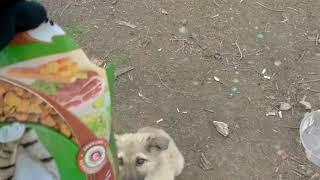 Бездомные Голодные Собаки
