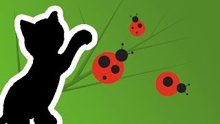 Cat Games App - Catch The Lady Bug Video (for cats only)