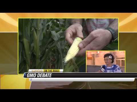 May Fujiwara   GMO Debate
