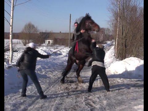 На что смотреть при покупке лошади.