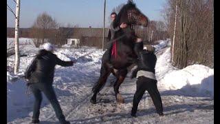 На что смотреть при покупке лошади.(Несложные тесты для выявления проблем по здоровью и психике, у покупаемой лошади., 2016-09-07T07:18:16.000Z)
