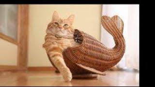 A selection is funny super kittensтi - Подборка смешная с кошками