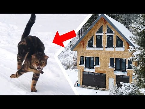 What It's REALLY Like To Build A House With BENGAL CATS