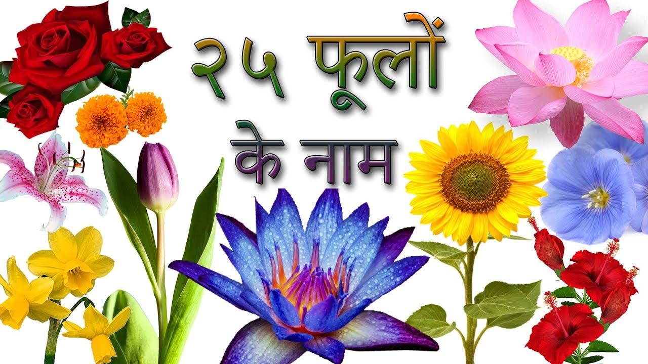 25 Flowers Names In Hindi फ ल क न म ह द म Phoolon Ke Naam In Hindi Hindi Flowers Youtube