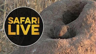safariLIVE - Sunset Safari - 2018, 18. June